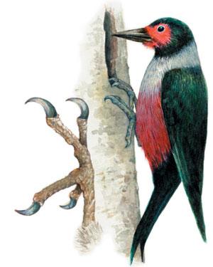 Woodpecker Feet | www.pixshark.com - Images Galleries With ...